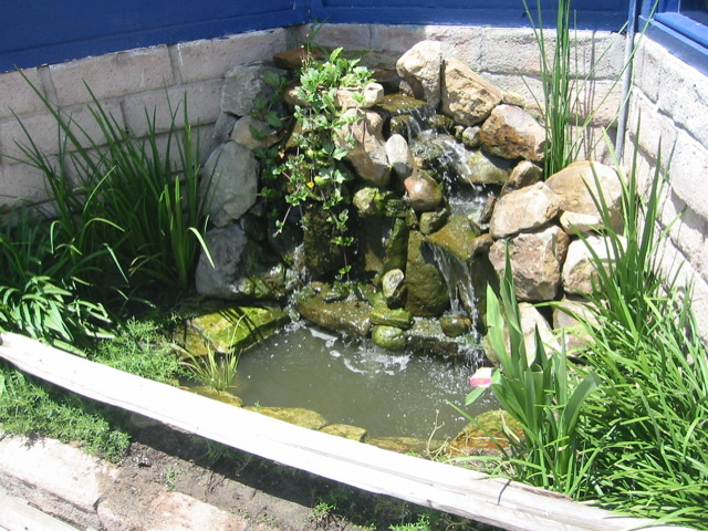 Pasadena pond cleaning service la koi pond company for Fish pond maintenance